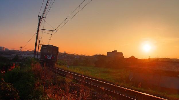 Photos: 朝日を浴びて