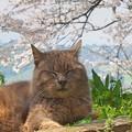 Photos: う・ら・ら