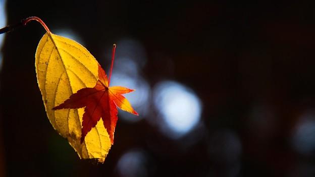 Photos: Sigh Of The Fall