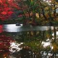 Photos: まだまだ秋
