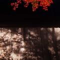 Photos: まだまだまだ秋