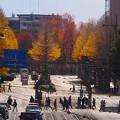 Photos: 冬陽射し
