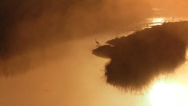 Photos: 水辺の朝