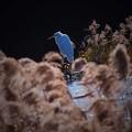 Photos: 白い冬