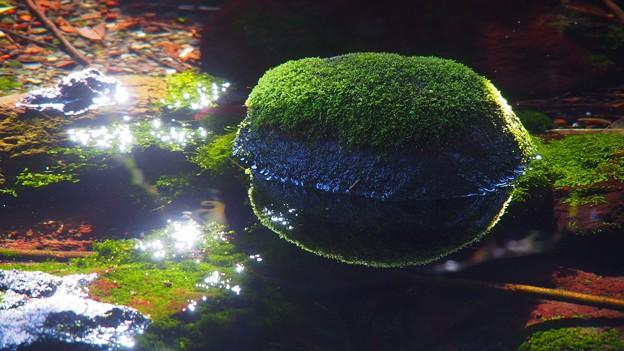 Photos: 水温む