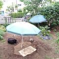 写真: 0628_ブラ雄の庭です