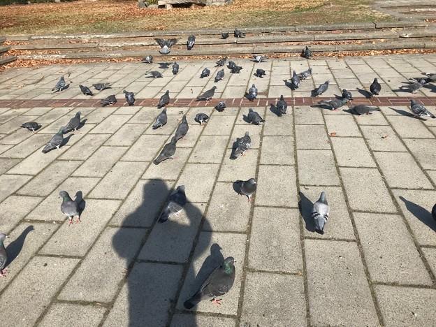1116_散歩途中で鳩に餌をあげました