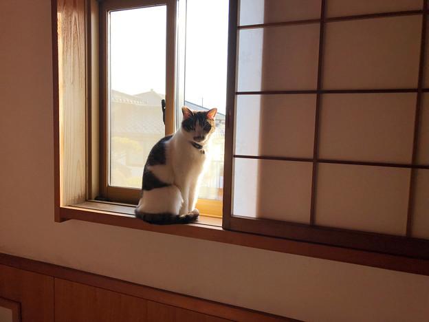 0309_早朝窓辺のナビ