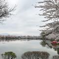 Photos: これも桜