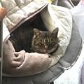 Photos: 0121_野良猫キジの寝床