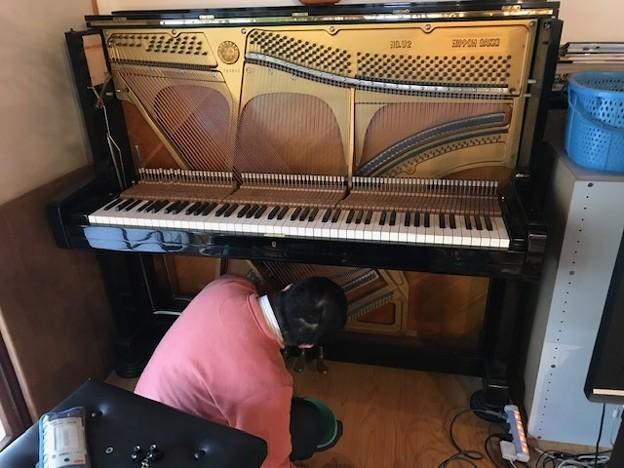 0127_ピアノの調律師