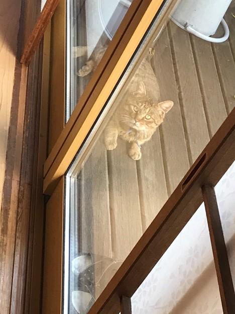 0312_野良猫キジ、中庭でくつろぐ