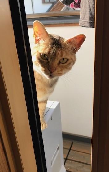 Photos: 0321_野良猫キマが二階にやってきた