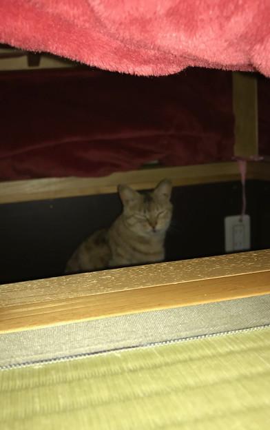 0425_野良猫キマこたつに入る