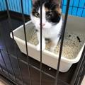 0716_保護猫の片目の猫