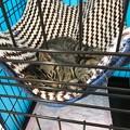 0716_キジの子猫3ヶ月