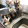 0909_保護猫ちゃんズ