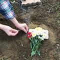 1018_ナビさん埋葬
