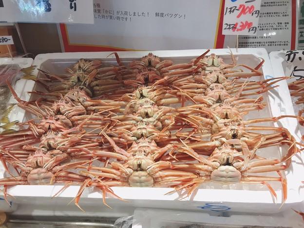 1113_せいこ蟹