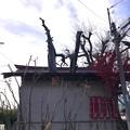 Photos: 1126_小さなお宮、御神木が突き抜けていた