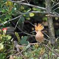 Photos: 孤鳥