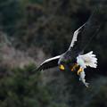「鳥の食」2最好1大鷲画像