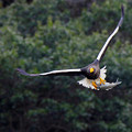 Photos: 「鳥の食」3最好2大鷲画像