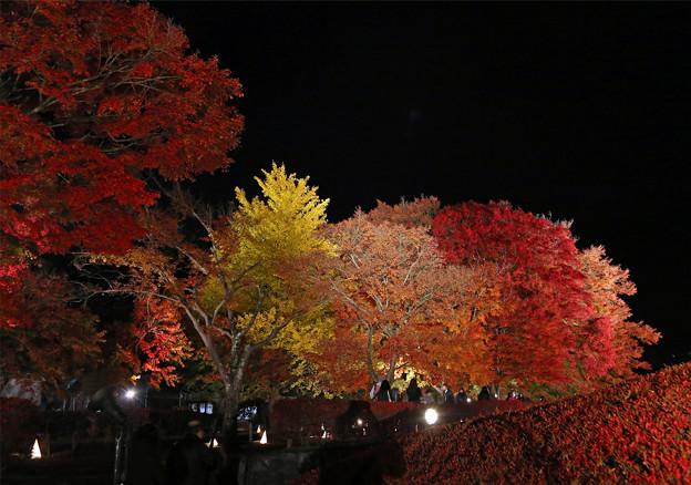 もみじ回廊夜紅葉