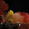 Photos: もみじ回廊夜紅葉