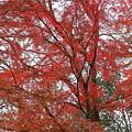 Photos: 炎上する木