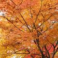 Photos: 黄の葉