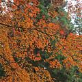 Photos: 紅葉です
