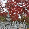 ダークレッドの紅葉