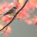 Photos: 12月の紅葉?