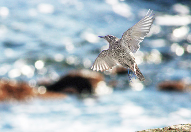 波光る磯の鳥にも春立ちぬ