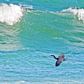 Photos: 黒い鳥往く春の海