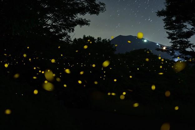 富士山姫ボタル9