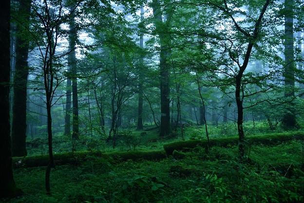 姫の棲む霧森
