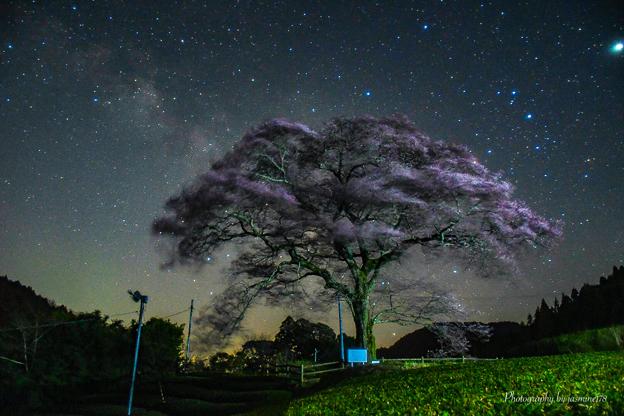 Photos: 水目桜と天の川