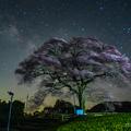 写真: 水目桜と天の川