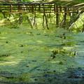 Photos: 緑地の池