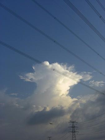 青空と入道雲ととりさん