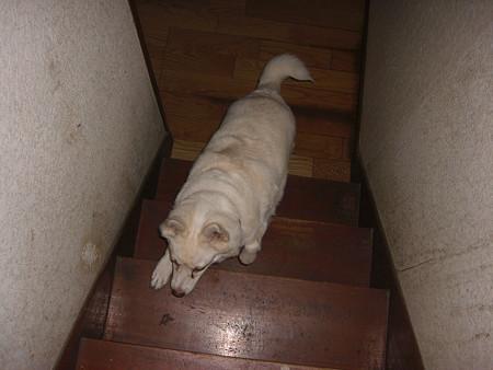 階段をあがるましろちゃん