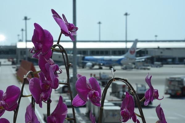 蘭の花の向こうに見えるのはジンベイザメの飛行機