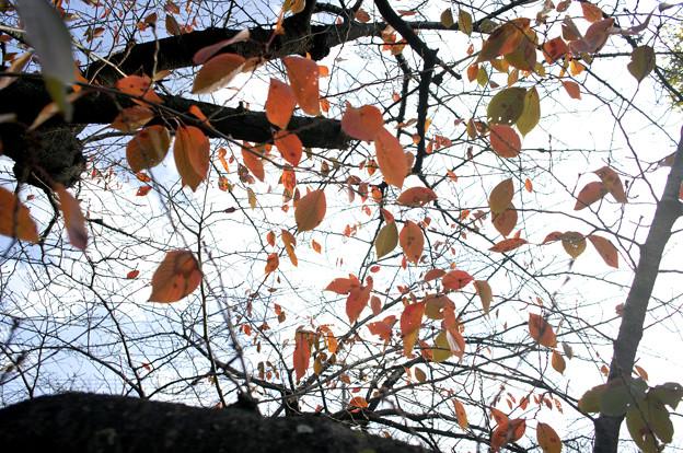 名古屋市内の紅葉