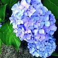 写真: 色彩