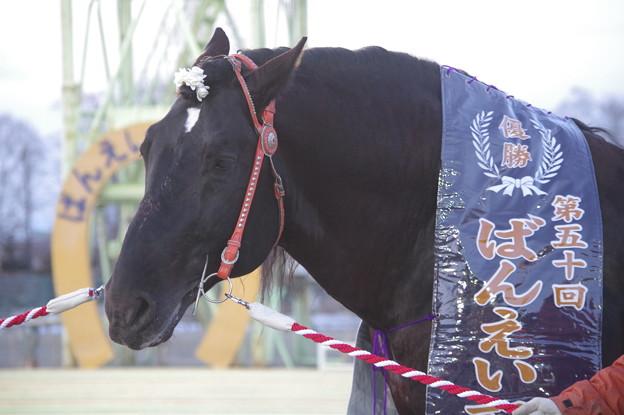 オレノココロ (2018年3月25日 ばんえい記念表彰式)