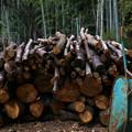 Photos: 椎茸の原木