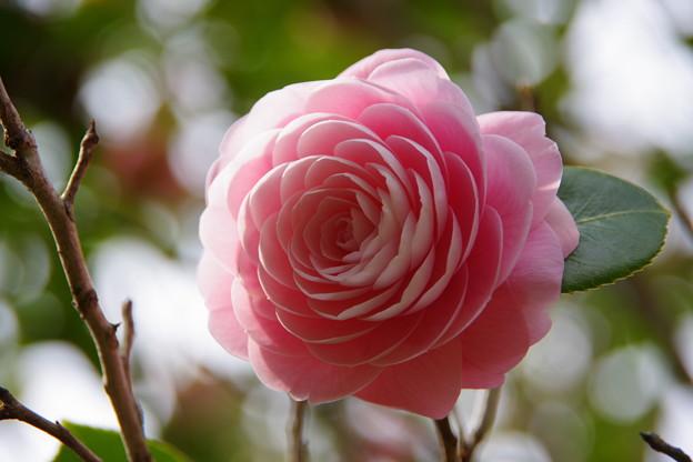 IMGP0872 花