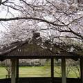 鏡野公園 IMGP0831